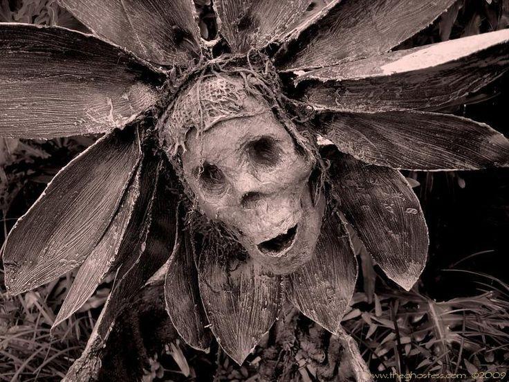 99 best Halloween images on Pinterest Halloween parties, Halloween