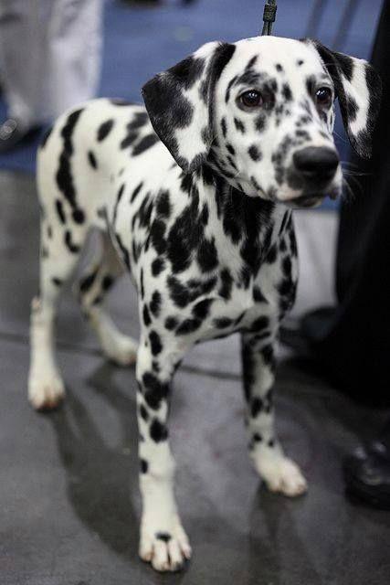 are you gonna throw it? #rescuedog #dog #itsarescuedoglife