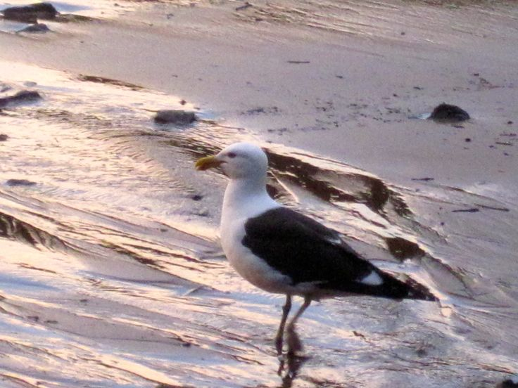 Seagull posing for the camera!