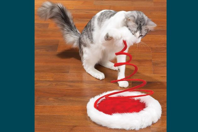 Best 25 interactive cat toys ideas on pinterest chat for Diy cat teaser wand
