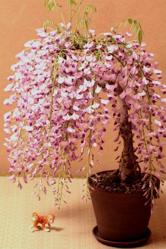 ♦ᴥI love this cute #bonsai.ᴥᴥ #BonsaiInspiration