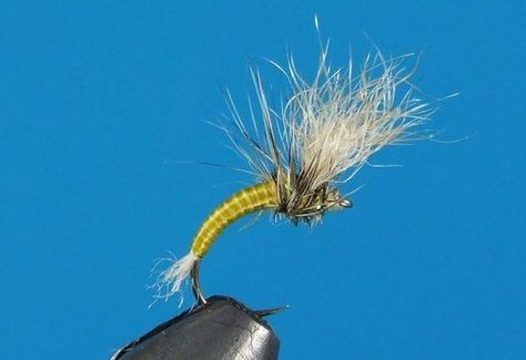 Fly Patterns: A BWO Emerger, a Meaty Streamer, and a Gorgeous Full Dressed Salmon Fly | Hatches Fly Tying Magazine