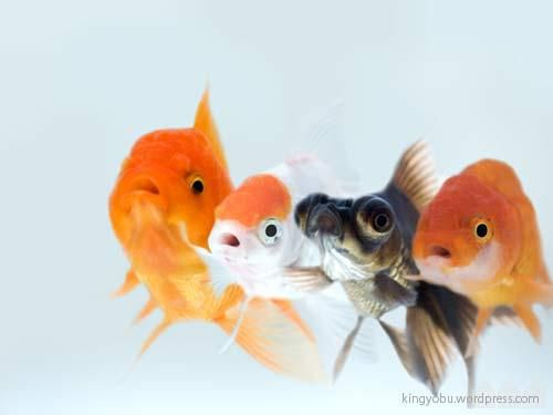 WHAT?! #Goldfish #Photography