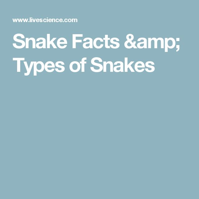 Snake Facts & Types of Snakes