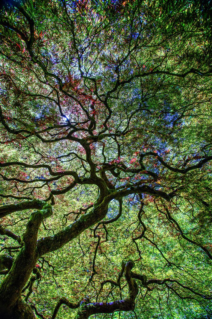 24 best Tree Love images on Pinterest | Forests, Beautiful ...