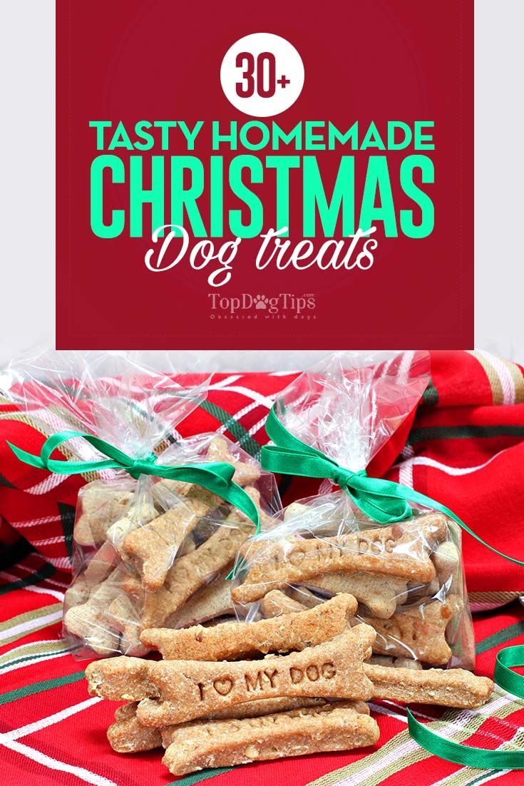 20 Tasty Homemade Christmas Dog Treat Recipes Homemade Dog