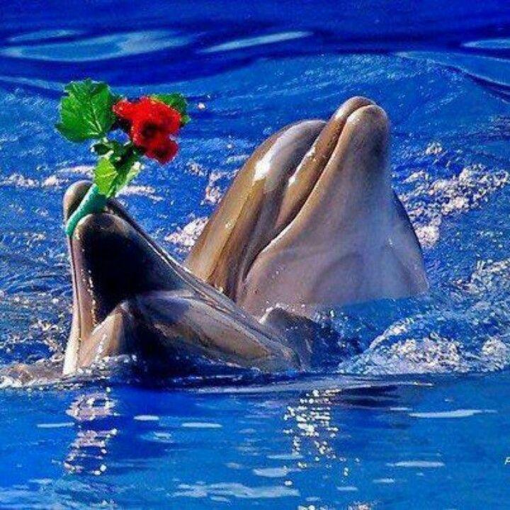фото дельфин мерцающий что