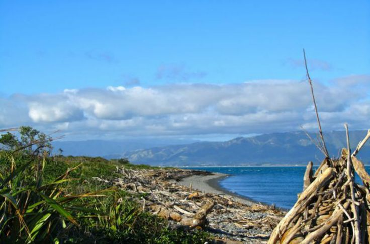 3 Incredible Day Trips from Wellington, New Zealand travel tips