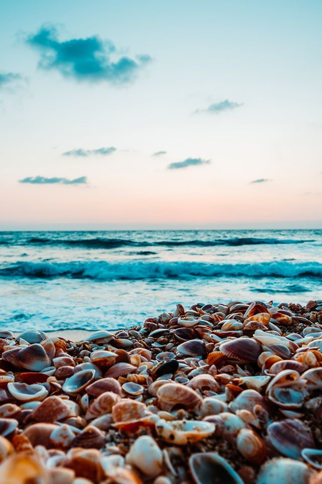 Ocean Water Shells Blue Sea Nature Photooftheday Beautiful Wonderful Amazing Awesome Hdwallpapers Wallpap Sky Images Sky Aesthetic Sea Photography
