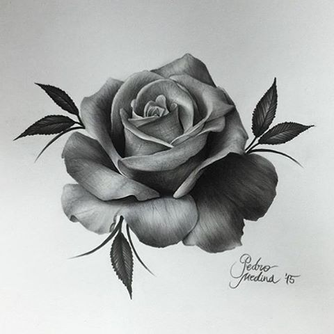 best 20 rose drawing tattoo ideas on pinterest rose tattoos rose tattoo forearm and black. Black Bedroom Furniture Sets. Home Design Ideas