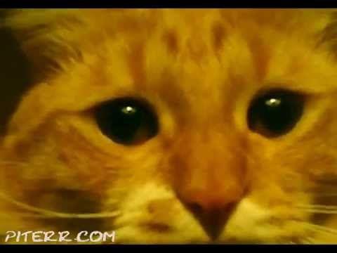 Фамилия Имя Отчество Пароль - смешные коты