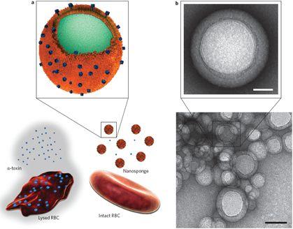 По оценкам каждая наногубка может нейтрализовать приблизительно 85 α-токсинов, 30 токсинов стрептолизин-О или 850 мономеров мелиттина.