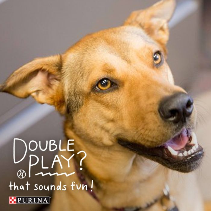Looking to have some playtime with your dog? We've got a list of dog games that will contribute to your dogs health and happiness!