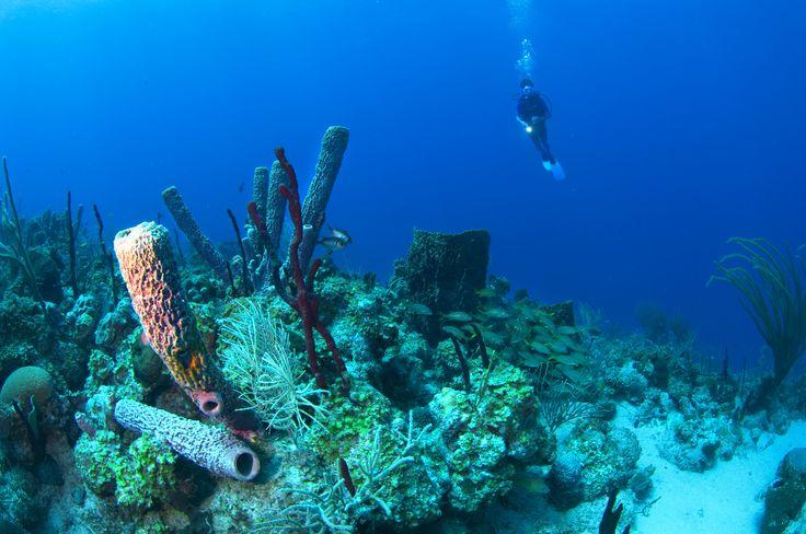 Dyk ned i Dansk Vestindiens blå, blå vand og forsvind ned i en helt anden verden!