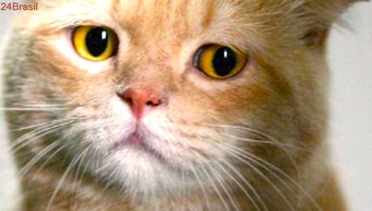 Escritor é impedido de adotar gatos por ser homossexual