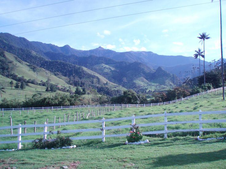 Valle del Cocora -  Coffee region - Colombia