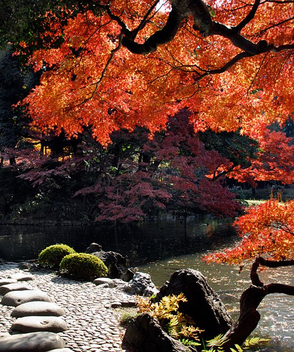 The World's Most Beautiful Botanical Gardens | Koishikawa Korakuen Gardens, Tokyo, Japan