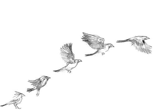 Birds flying away drawing - photo#9