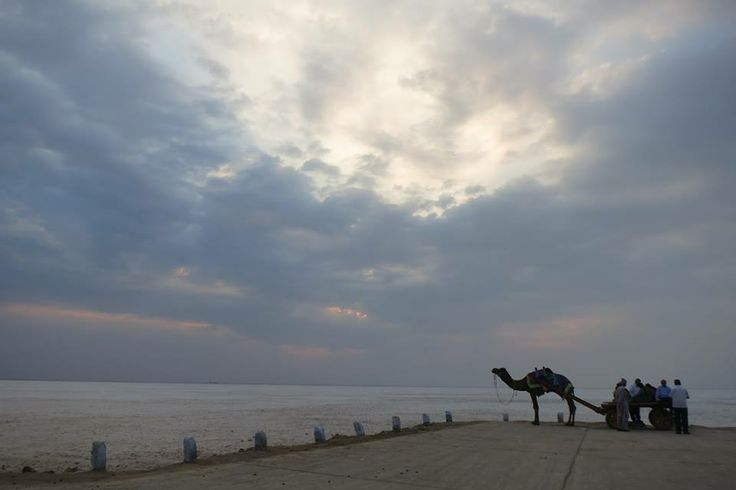 The rann and the camel