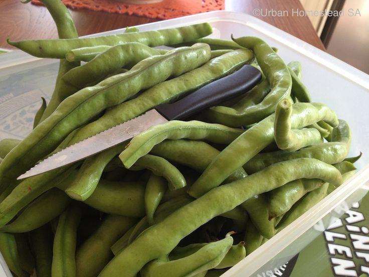 Broad beans by the basket in September.
