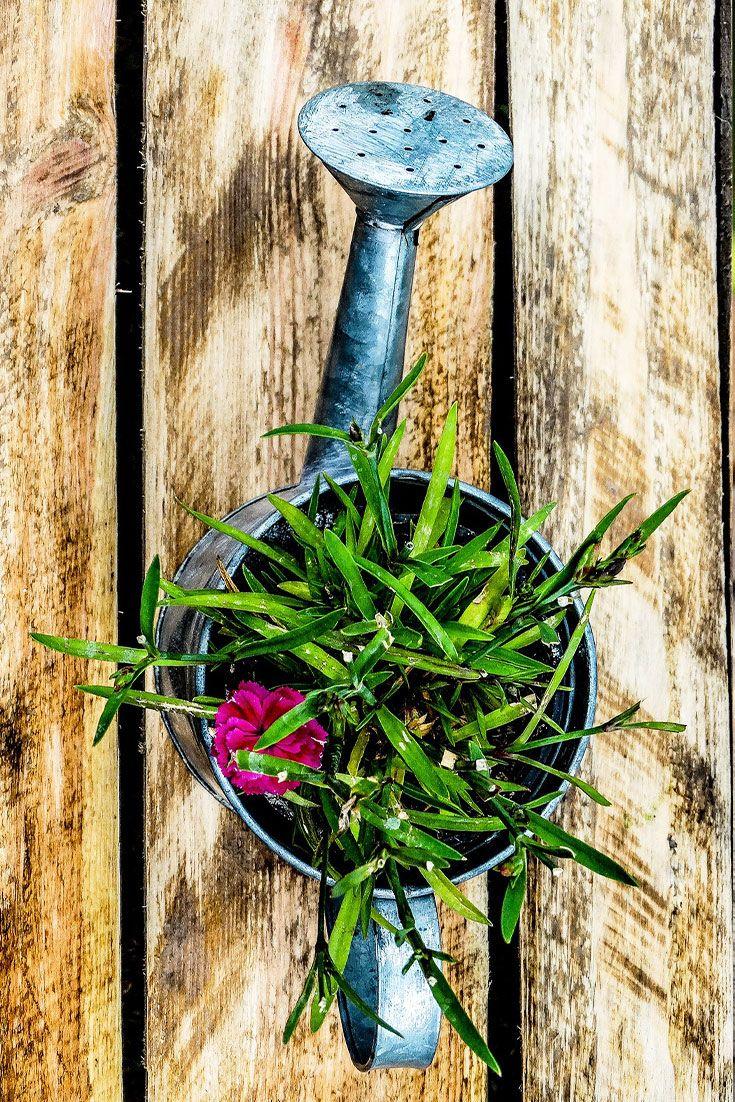Einfach U0026 Wirkungsvoll: Eine Bepflanzte Gießkanne Macht Sich Auf Jedem  Tisch Gut :) #. DekorationSommerEinfach