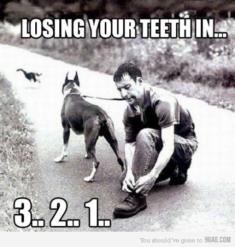 ouchie!!!: Dental Humor, Cat, Funny Dogs, Animal Humor, Funny Stuff, Bye Bye, Teeth, Dogs Funny, Bad Ideas