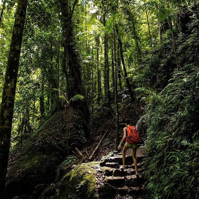 Discovering one of the lush green @qldparks of the @visitsunshinecoast hinterland at #KondalillaNationalPark. Great pic by g.voss via IG  #visitsunshinecoast #qldparks #thisisqueensland