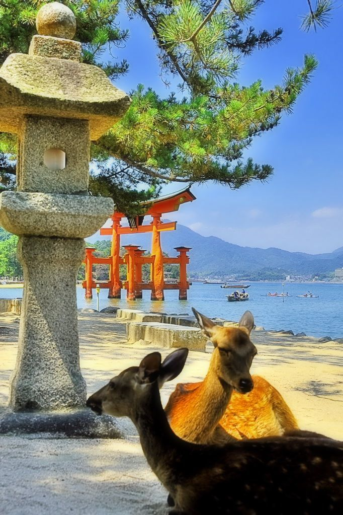 "Itsukushima Shrine in Hatsukaichi in Hiroshima Prefecture, Itsukushima, Japan | Youji Kawamura, on FotoBlur. ""Itsukushima Shrine (Itsukushima-jinja) is a Shinto shrine on the island of Itsukushima (popularly known as Miyajima), best known for its ""floating"" torii gate. It's in the city of Hatsukaichi in Hiroshima Prefecture in Japan. The shrine complex is listed as a UNESCO World Heritage Site, and the Japanese government has designated several buildings and possessions as National…"