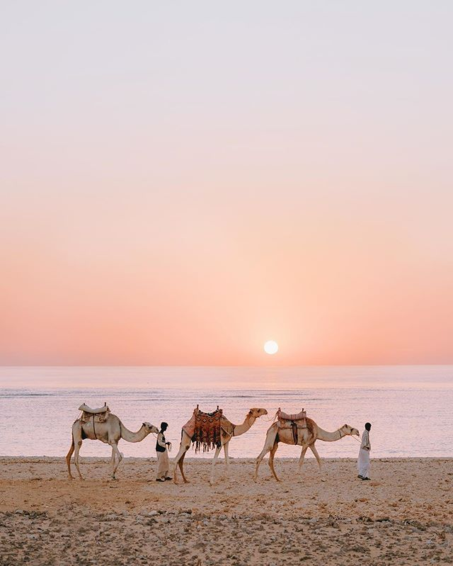 Magic mornings... ✨ Camel rides and watching the Egyptian sun rise over the…