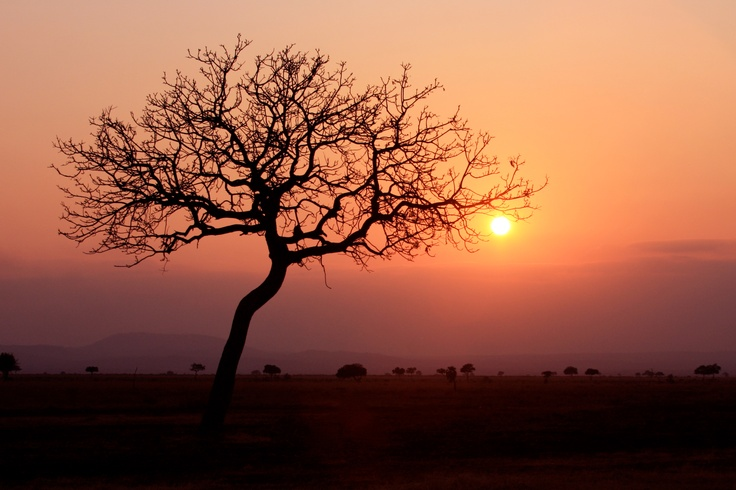 African Safari: Bucket List, African Safari, Beautiful Place, Beautifully Random, Painting Ideas, Amazing Photos