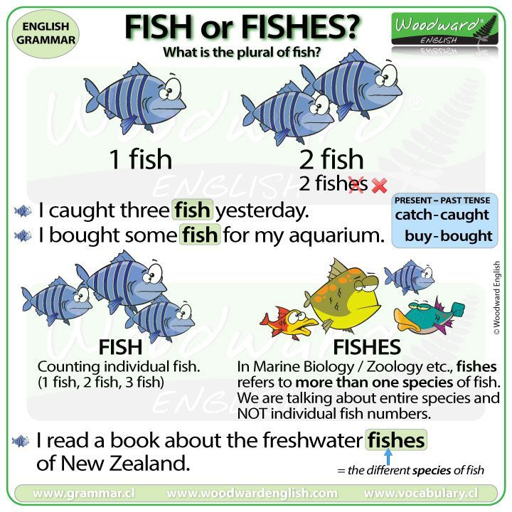 The Plural Of Fish Fish Or Fishes Clase De Ingles Palabras
