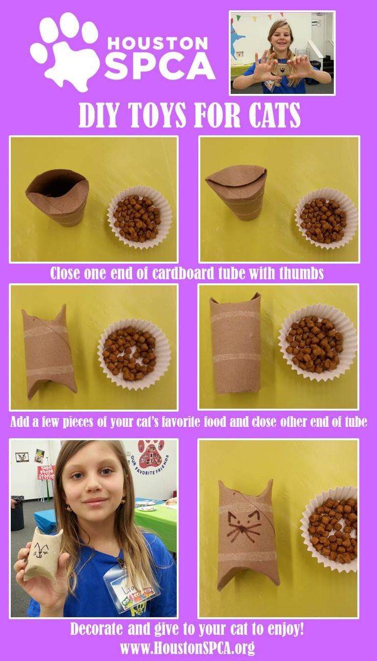 309 Best Images About Diy Cat Projects On Pinterest Cats