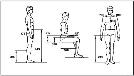 12 Best Anthropometry Images On Pinterest Anatomy Human