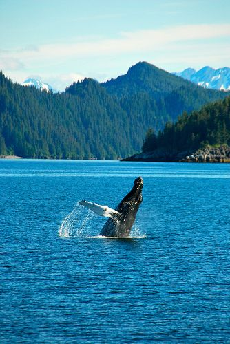 Whale watching in Alaska.