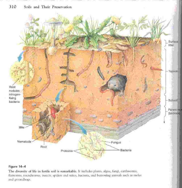 7 best images about capas de la tierra y suelos on - Tipos de suelos ...