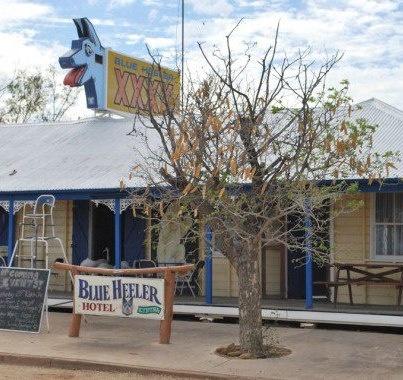 Blue Heeler Queensland