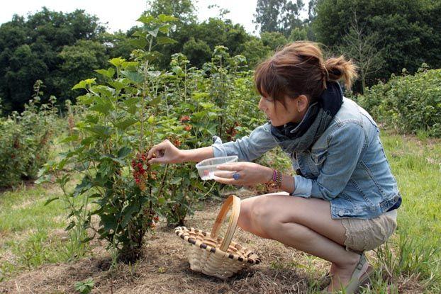Encaje para recoger fruta...