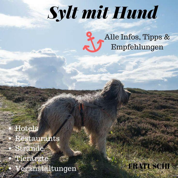 Sylt mit Hund! Die Insel bietet viele Möglichkeiten für dich und deinen Hund. Alle Infos zu Stränden, Verboten, Freilauf, hundefreundlichen Restaurants und Hotels sowie Tierärzten findest du in meinem Bericht. #Sylt #Hund#Urlaubmithund #Nordsee