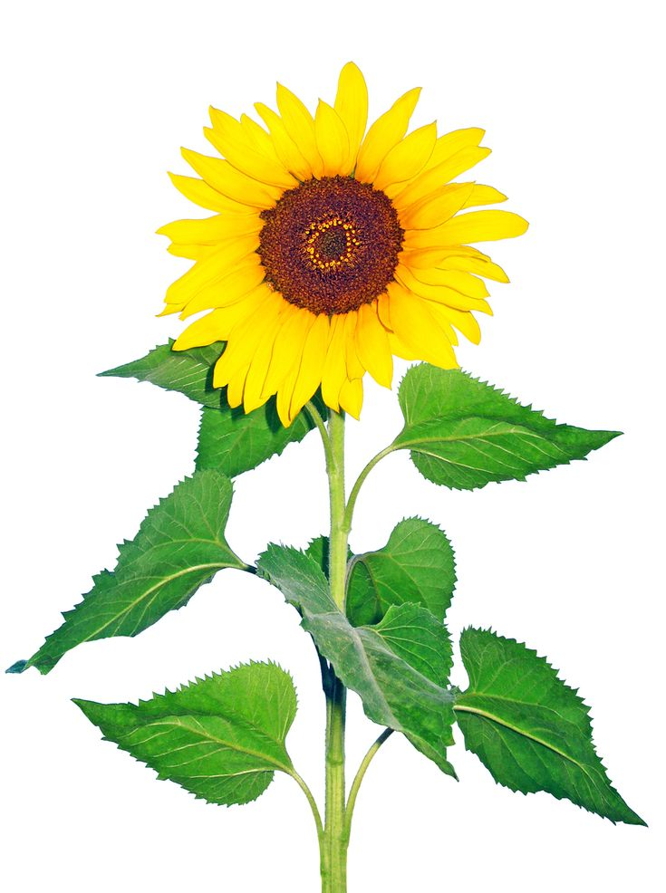 Cut flowers are one of the best cash crops for small growers all across North America, with profits of up to $30,000 per acre.