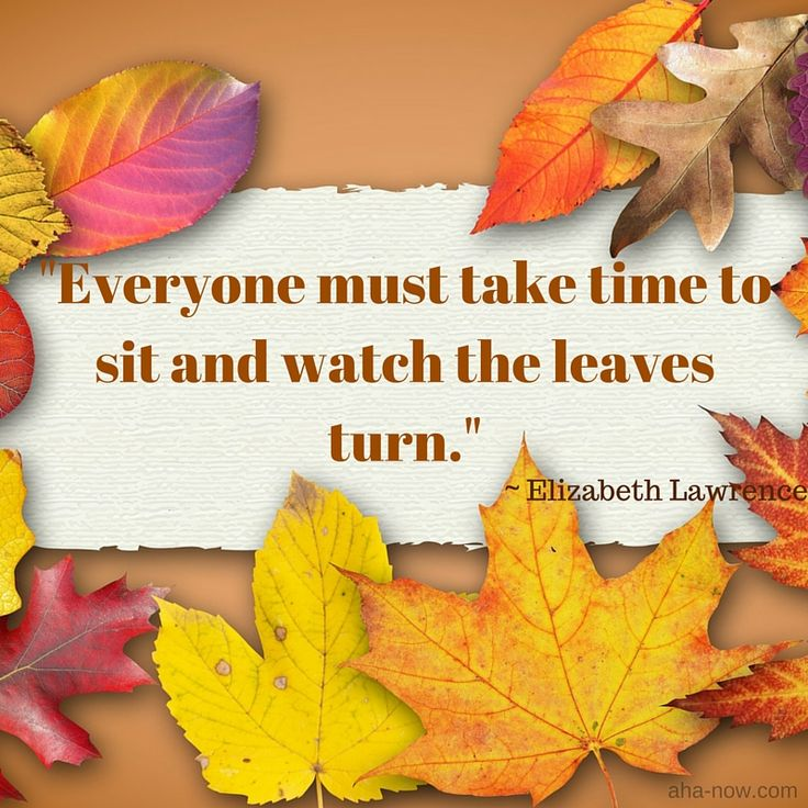 """Everyone must take time to sit and watch the leaves turn.""  ~ Elizabeth Lawrence"
