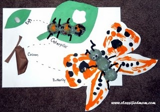 Butterfly life cycle on leaf