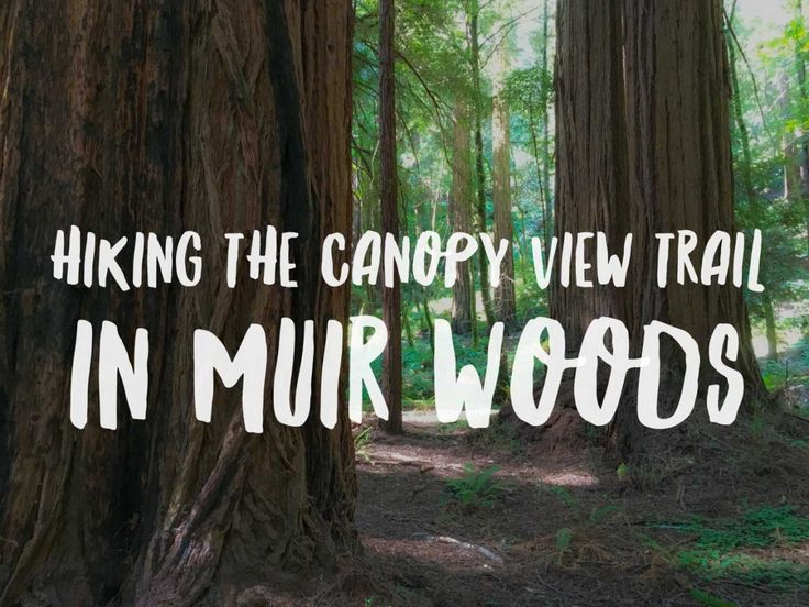 Hiking the Canopy View Loop in Muir Woods National Monument