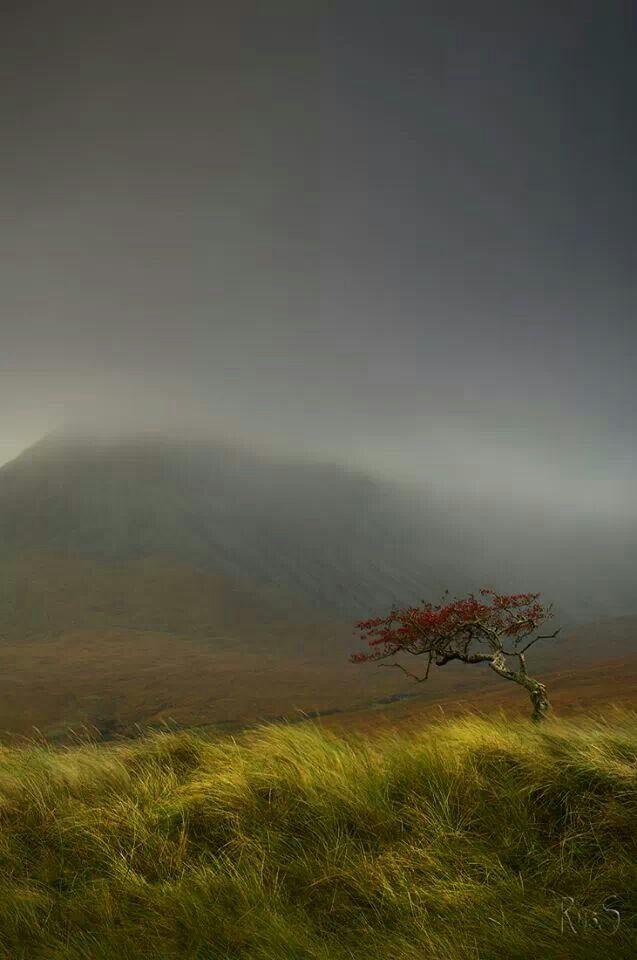 Rowan Tree,  Glenn Brittle,  Scotland