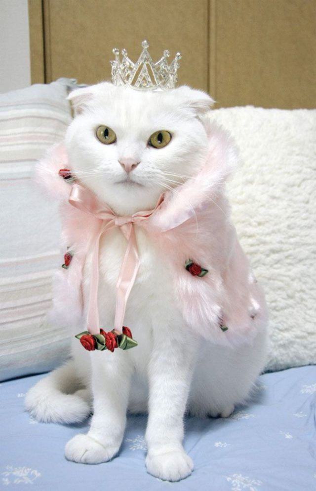 Arhivy Stylish Cats Page 2 Of 3 Cats Crazy Cats Cute Cats