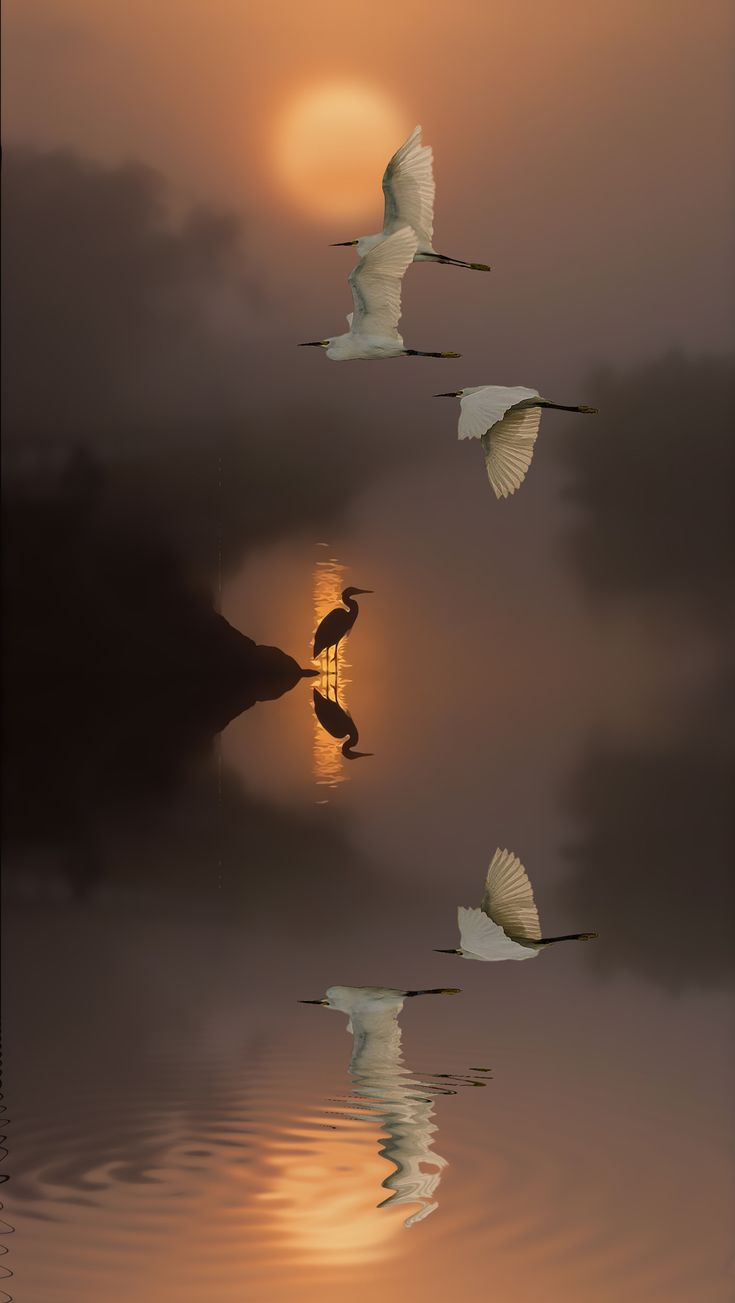 ...flying in the Mist...