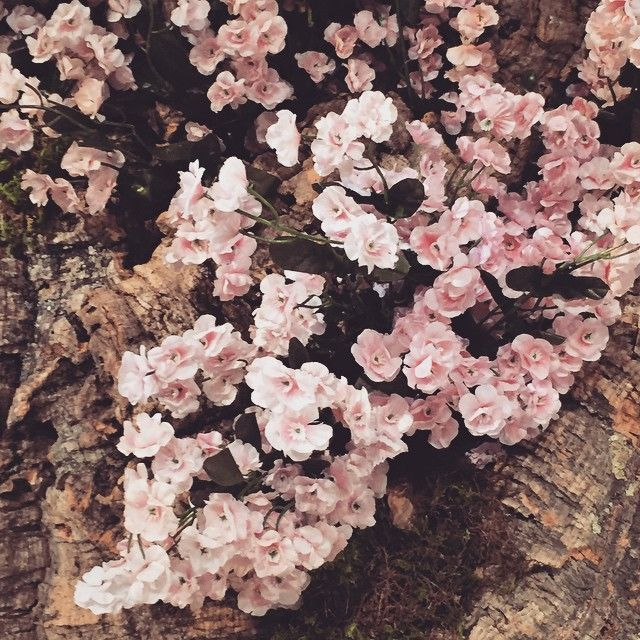 A little glimpse of blossoms. #inesdisanto #inesdisanto2016 #inesdisantorunway