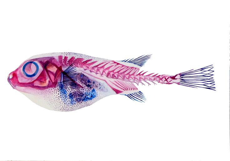 Fishy business, watercolour on paper, Nikolina Ivanovic,2016