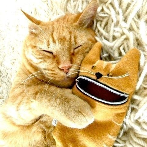 we're friends :): Cats, Iphone Cases, Orange Cat, Ipod Cases, Phones Cases, Gingers Cat, Camera Cases, Zippers Pouch, Animal