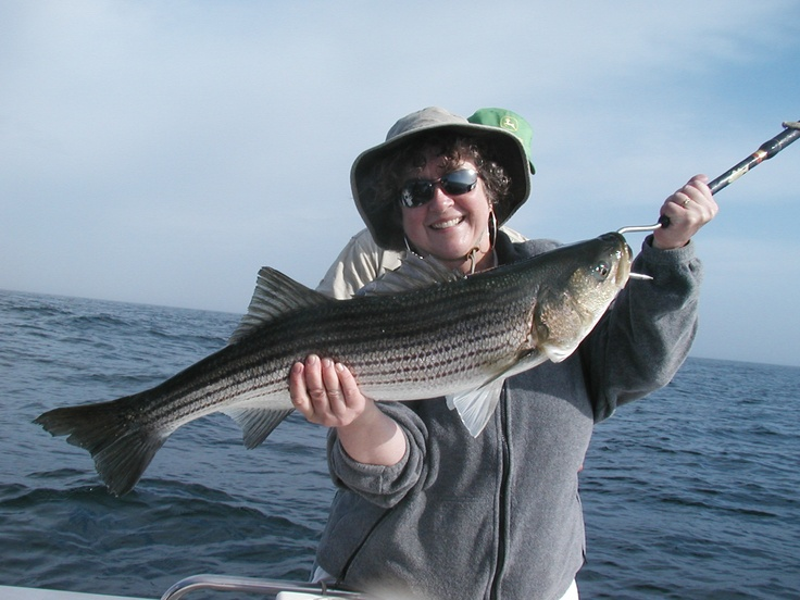 66 Best Images About Cape Cod Charter Fishing On Pinterest
