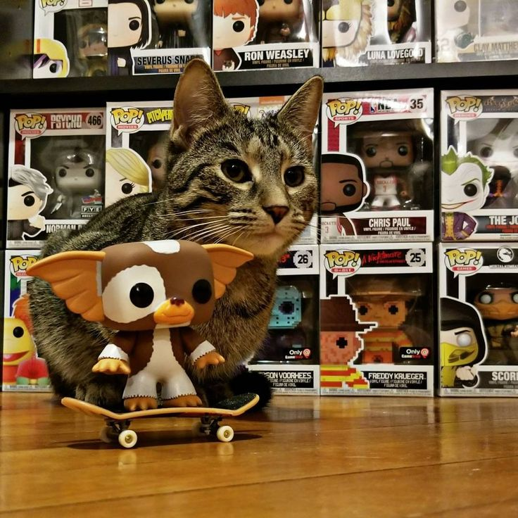 Pepper and Gizmo...not the only one in the house who likes #toys       #originalfunko #gremlins #gizmo #funkophotobox #funkojunkie78#funkopopvinyls  #funkopopphotography #funkoaddiction #funkofunatic #funkofamily #funkocats #topfunkophotos #toys #poplife #funkofunatic #mrsfunkojunkie #funkoholic #funkofam #thefunkoshow #funko #funkomania #popvinyl #popvinyls #toyphotography #qualityfunkophotography